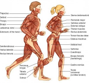 maori massage muscoli